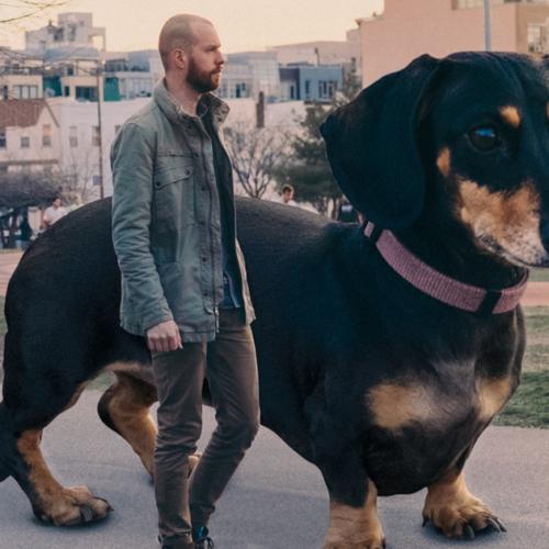 giant dog 1