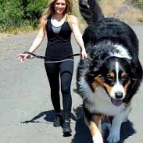 giant dog 2