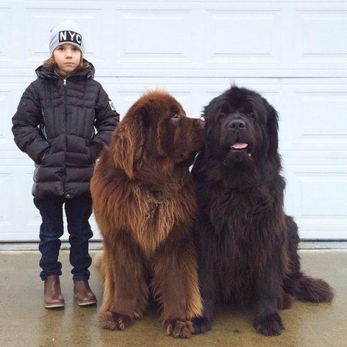 giant dog 3