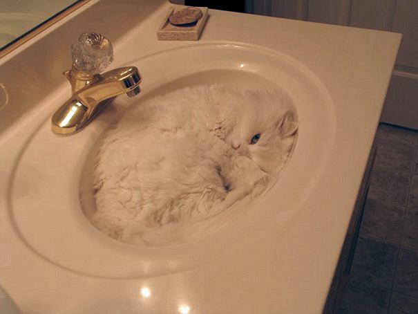 Koty są płynem?