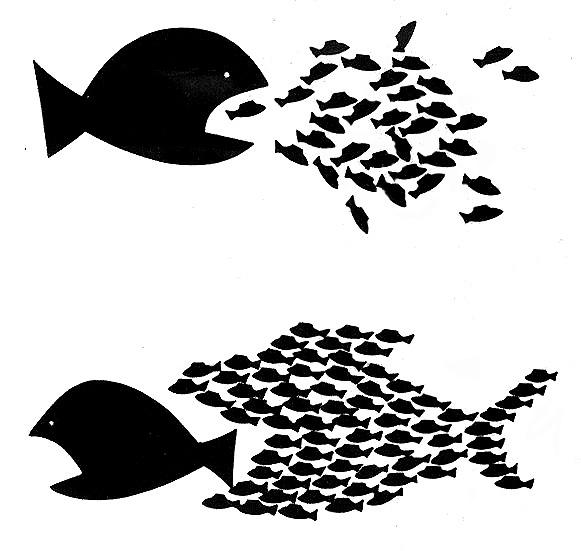 big-fish-little-fish.jpg