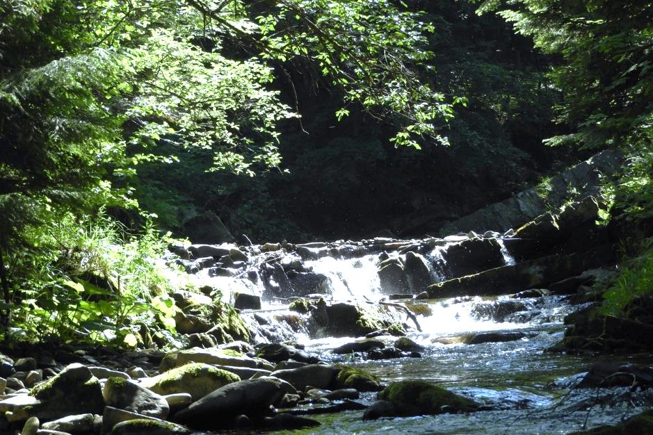Obraz zawierający drzewo, zewnętrzne, woda, przyroda  Opis wygenerowany automatycznie