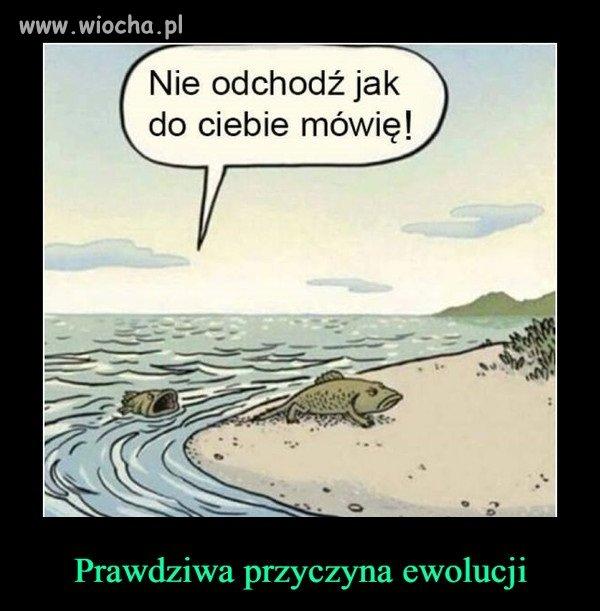 C:\Users\Piotr\Pictures\Na 1 kwietnia\ewolucja.jpg
