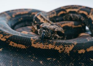 black and brown snake on ground