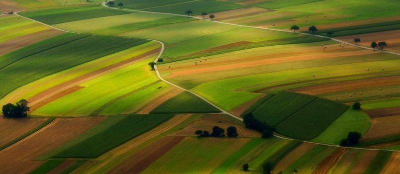 Kolorowy trawa na wzgórzaie